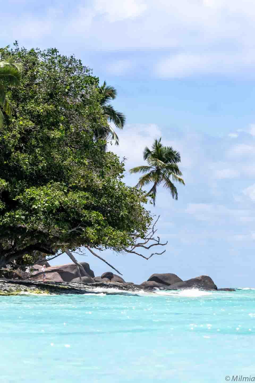 Silhouette Island indischer Ozean Palmen